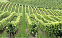 WIne Loving Technical Writer Wanted