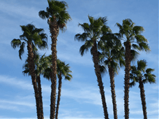Palm Spring, CA - Location for Intelligent Content 2012